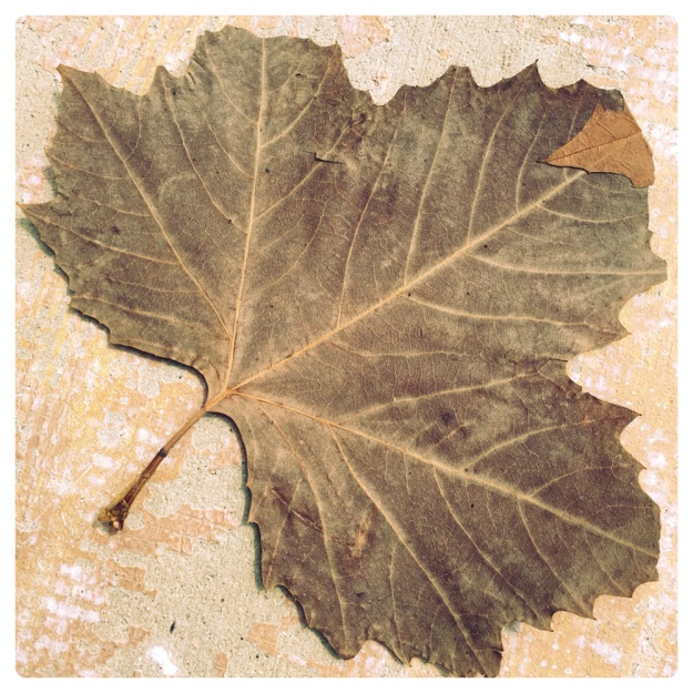 Thirty-nine-year-old leaf